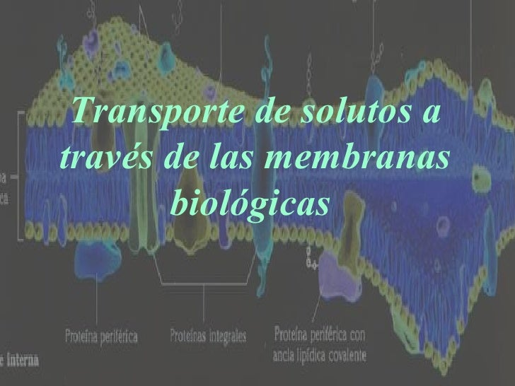 transporte de solutos a traves de las membranas biologicas