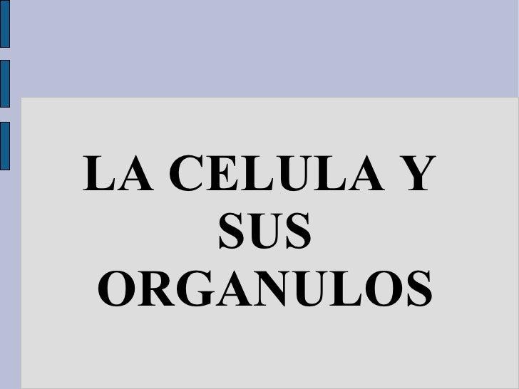 LA CELULA Y SUS ORGANULOS