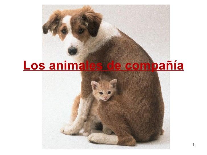 Ana Junquera Muñiz Los animales de compañía