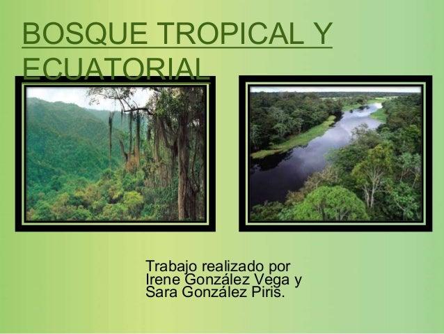 BOSQUE TROPICAL YECUATORIAL      Trabajo realizado por      Irene González Vega y      Sara González Piris.