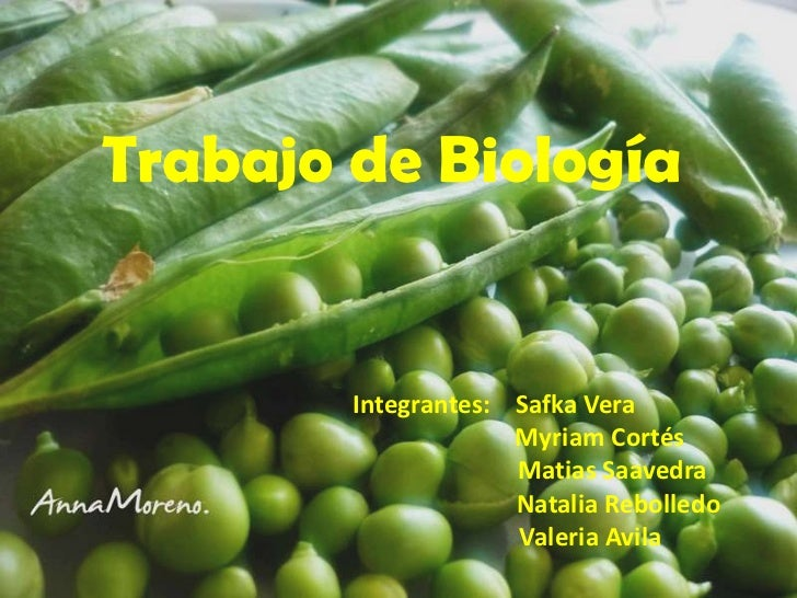 Trabajo de Biología        Integrantes: Safka Vera                     Myriam Cortés                     Matias Saavedra  ...