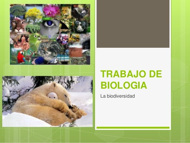 TRABAJO DE BIOLOGIA La biodiversidad