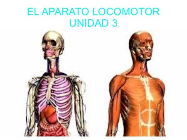 EL APARATO LOCOMOTOR       UNIDAD 3