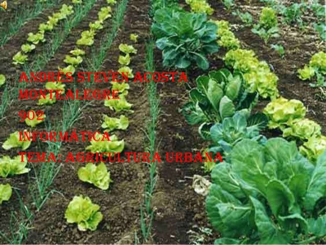 Andrés Steven AcostaMontealegre902InformáticaTema: Agricultura Urbana