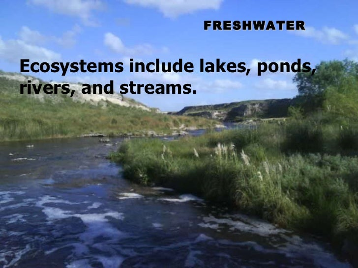 FRESHWATER Ecosystems include lakes, ponds, rivers, and streams.