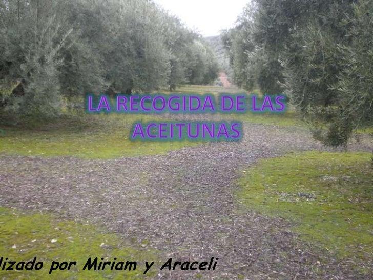 lizado por Miriam y Araceli