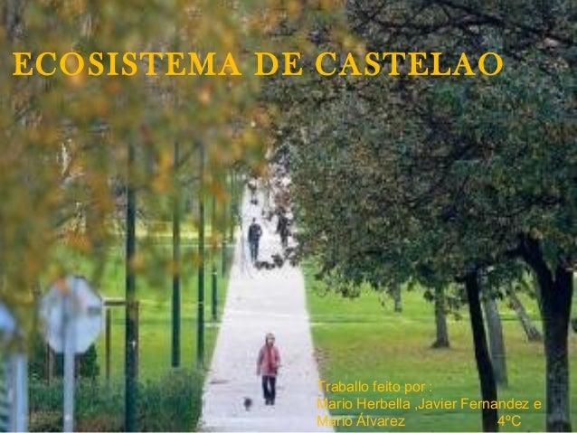 ECOSISTEMA DE CASTELAO Traballo feito por : Mario Herbella ,Javier Fernandez e Mario Álvarez 4ºC