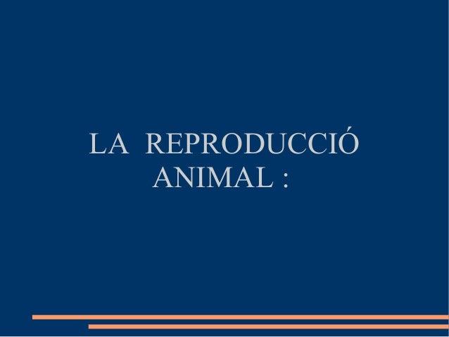 LA REPRODUCCIÓ   ANIMAL :