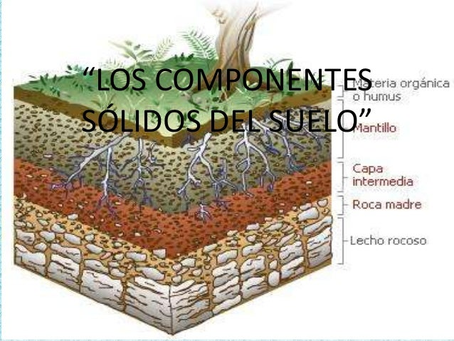 los componentes solidos del suelo