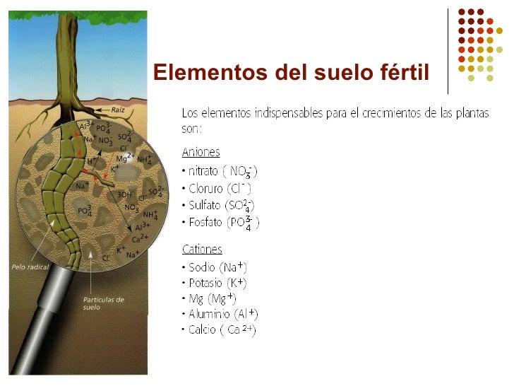 Qu mica del suelo for Que elementos conforman el suelo