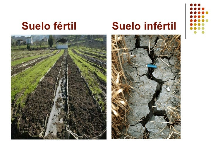 Qu mica del suelo for Suelo fertil e infertil