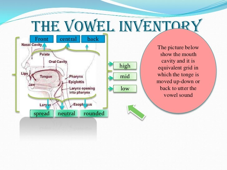 The vowel inventoryFront    central    back                                    The picture below                          ...