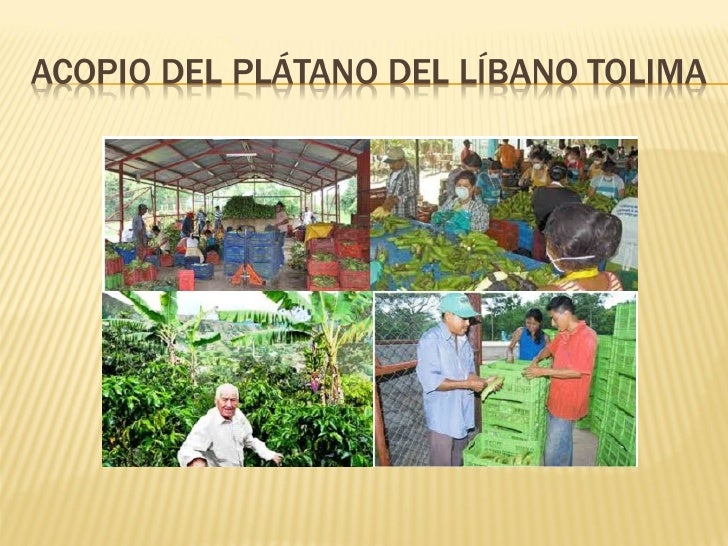 Trabajo final del_acopio_del_platano_grupo_263