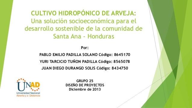 CULTIVO HIDROPÓNICO DE ARVEJA: Una solución socioeconómica para el desarrollo sostenible de la comunidad de Santa Ana - Ho...