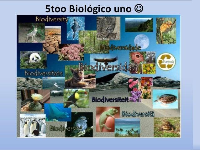 5too Biológico uno 