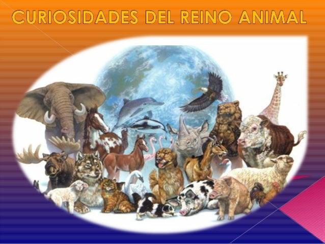 Trabajos curiosidades de los animales 2014