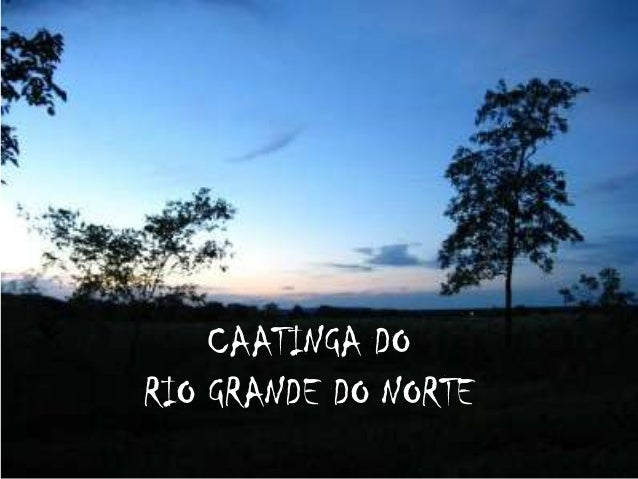 CAATINGA DORIO GRANDE DO NORTE