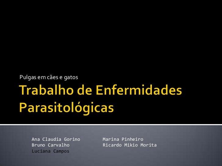 Trabalho de Enfermidades Parasitológicas<br />Pulgas em cães e gatos<br />Ana Claudia Gorino<br />Bruno Carvalho<br />Luci...