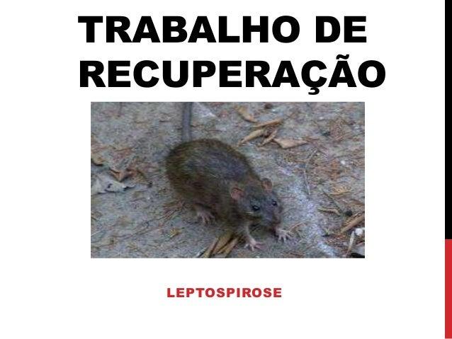 TRABALHO DE RECUPERAÇÃO LEPTOSPIROSE