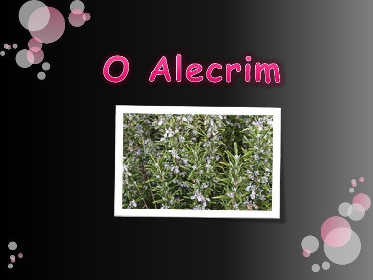 O Alecrim<br />