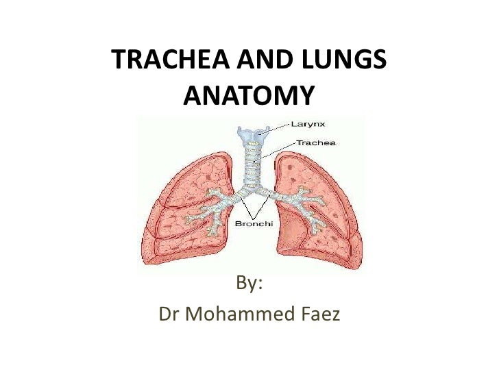 TRACHEA AND LUNGS ANATOMY<br />By:<br />Dr Mohammed Faez<br />
