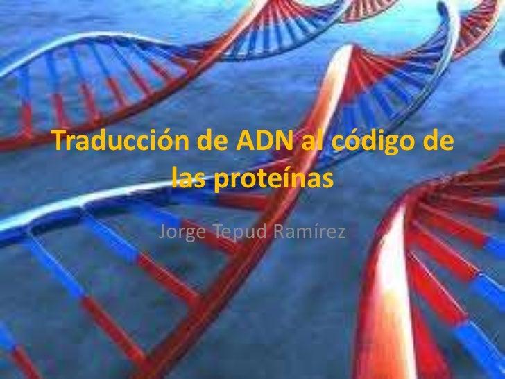 Traducción de adn al código de las proteínas