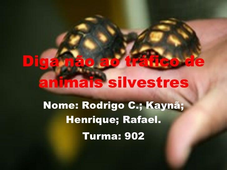 Diga não ao tráfico de animais silvestres Nome: Rodrigo C.; Kaynã; Henrique; Rafael. Turma: 902