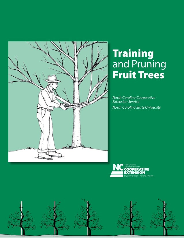 Training and Pruning Fruit Trees North Carolina Cooperative Extension Service North Carolina State University