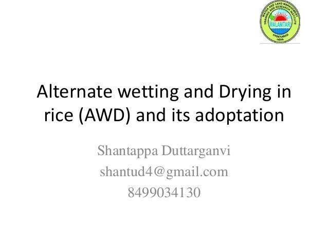Alternate wetting and Drying in rice (AWD) and its adoptation Shantappa Duttarganvi shantud4@gmail.com 8499034130