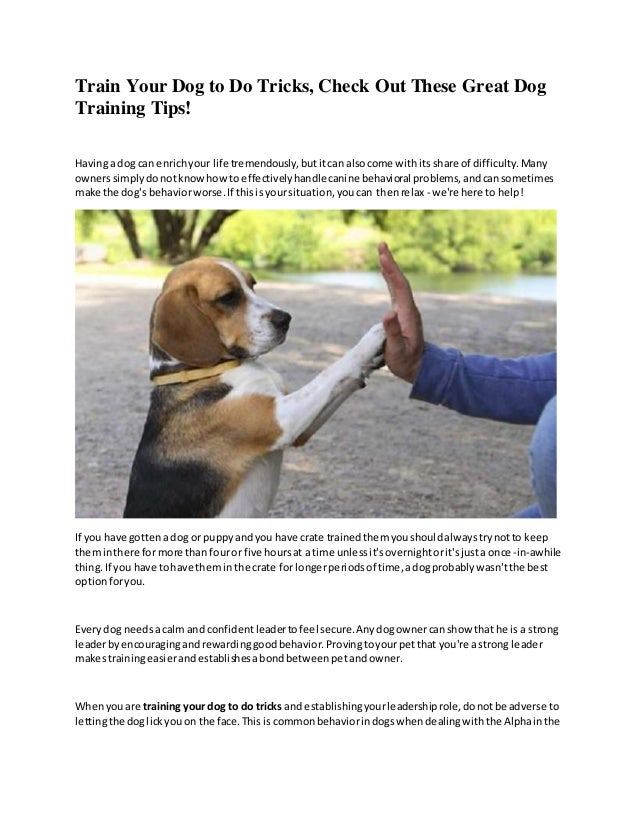 How Can You Train Your Dog