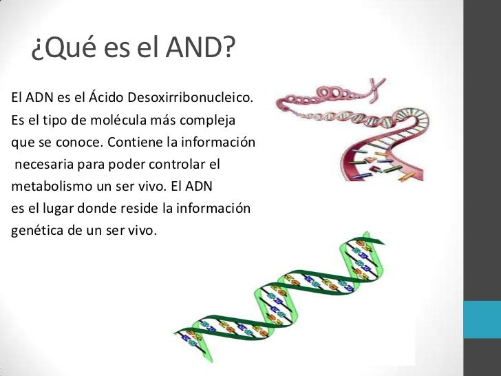 Resultado de imagen de Ácido desoxirribonucleico (ADN)
