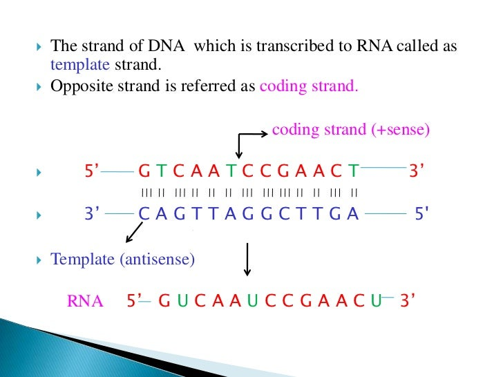 when an rna strand forms using dna as a template - transcription
