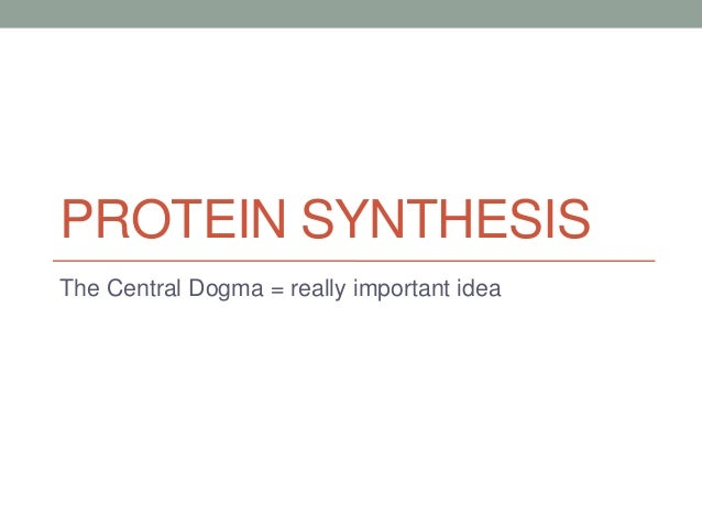 PROTEIN SYNTHESISThe Central Dogma = really important idea