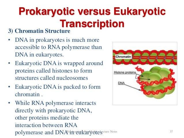 Eukaryotic Transcription Steps Eukaryotic Transcription
