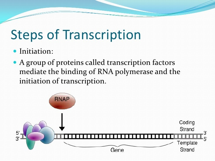Eukaryotic Transcription Steps Steps of Transcription