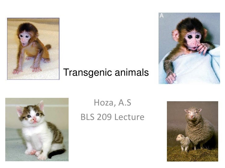 Transgenic animals      Hoza, A.S   BLS 209 Lecture