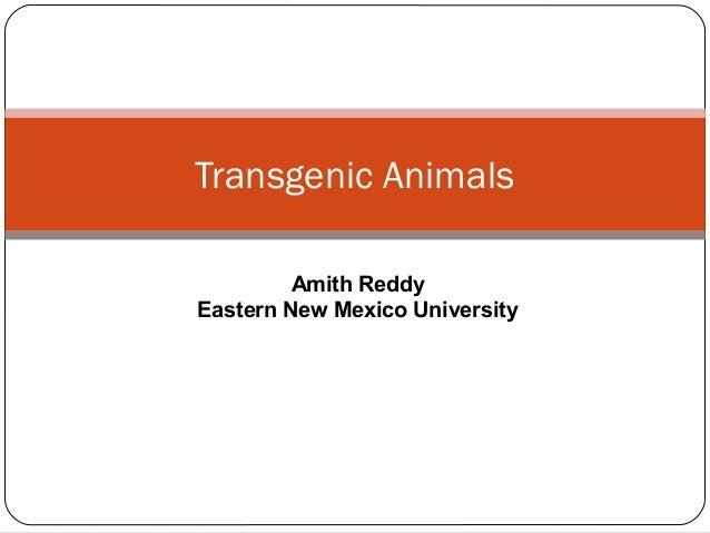 Transgenic Animals Amith Reddy Eastern New Mexico University