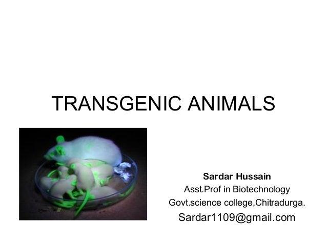 TRANSGENIC ANIMALS Sardar Hussain Asst.Prof in Biotechnology Govt.science college,Chitradurga. Sardar1109@gmail.com