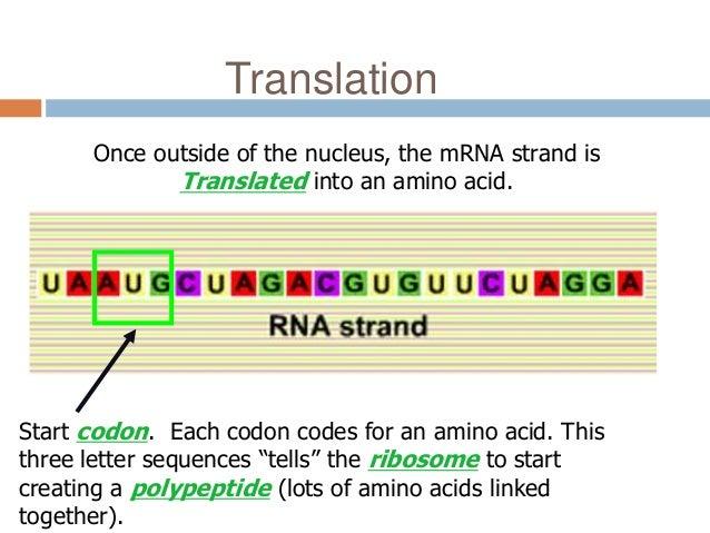 Translation mutation ppt