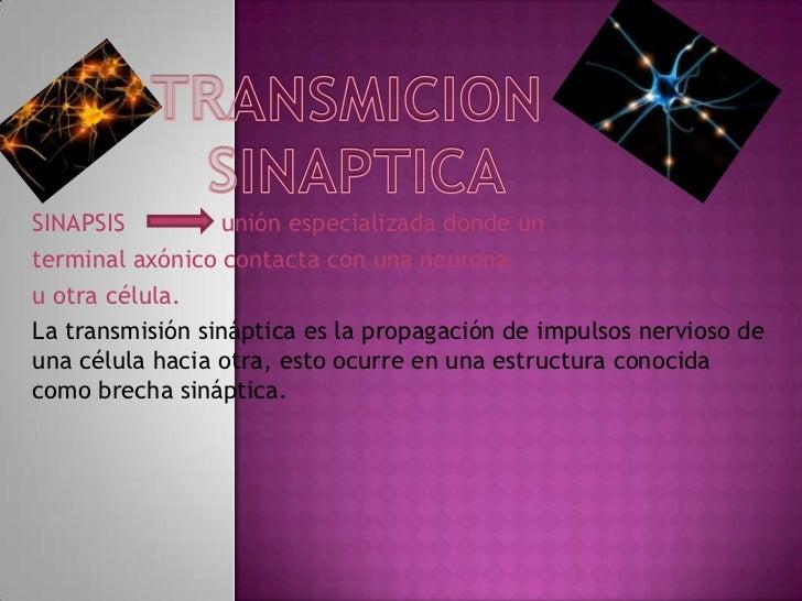 Transmicion sinaptica