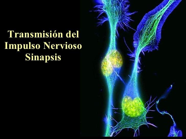 Transmisión del Impulso Nervioso Sinapsis
