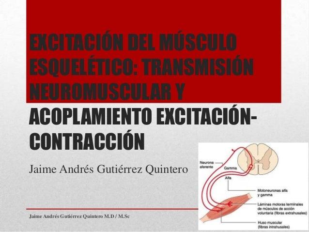 EXCITACIÓN DEL MÚSCULOESQUELÉTICO: TRANSMISIÓNNEUROMUSCULAR YACOPLAMIENTO EXCITACIÓN-CONTRACCIÓNJaime Andrés Gutiérrez Qui...