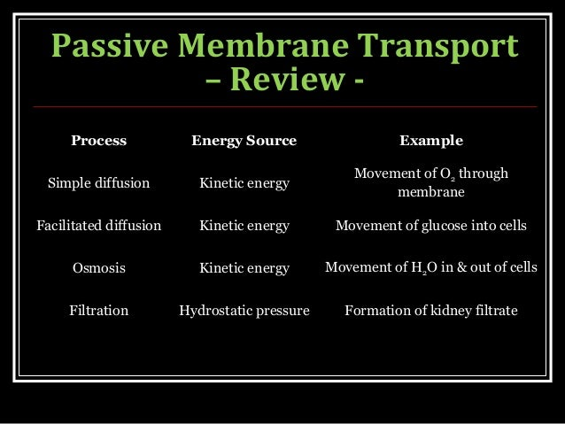 membrane transport process Electrochemical gradients and the membrane potential primary and secondary active transport na+/k+ pump.