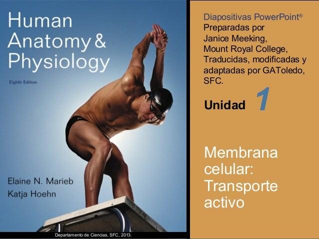 Diapositivas PowerPoint® Preparadas por Janice Meeking, Mount Royal College, Traducidas, modificadas y adaptadas por GATol...