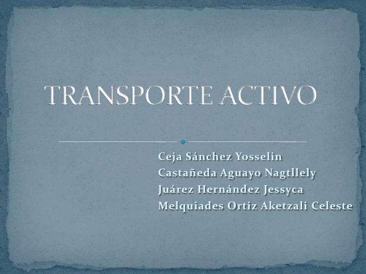 TRANSPORTE ACTIVO<br />Ceja Sánchez Yosselin<br />Castañeda Aguayo Nagtllely<br />Juárez Hernández Jessyca<br />Melquiades...