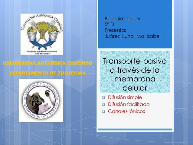 Transporte pasivo a través de la membrana celular