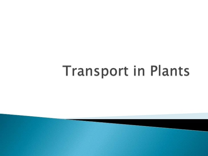Transport in Plants<br />