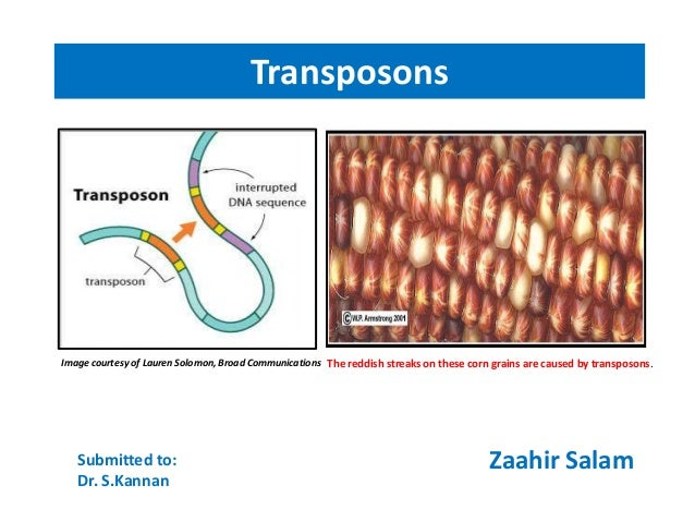 Transposons(jumping genes)