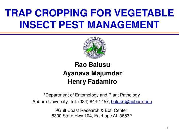 TRAP CROPPING FOR VEGETABLE  INSECT PEST MANAGEMENT                     Rao Balusu1                  Ayanava Majumdar2    ...