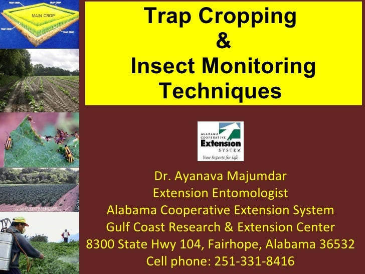 Trap Cropping  & Insect Monitoring Techniques  Dr. Ayanava Majumdar Extension Entomologist Alabama Cooperative Extension S...